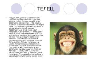 Телец обезьяна мужчина