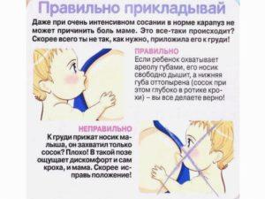 правильное грудное вскармливание
