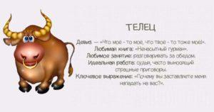 Как любит телец