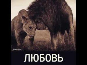 Если мужчина лев молчит