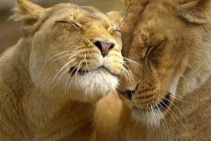 Как заинтересовать льва мужчину